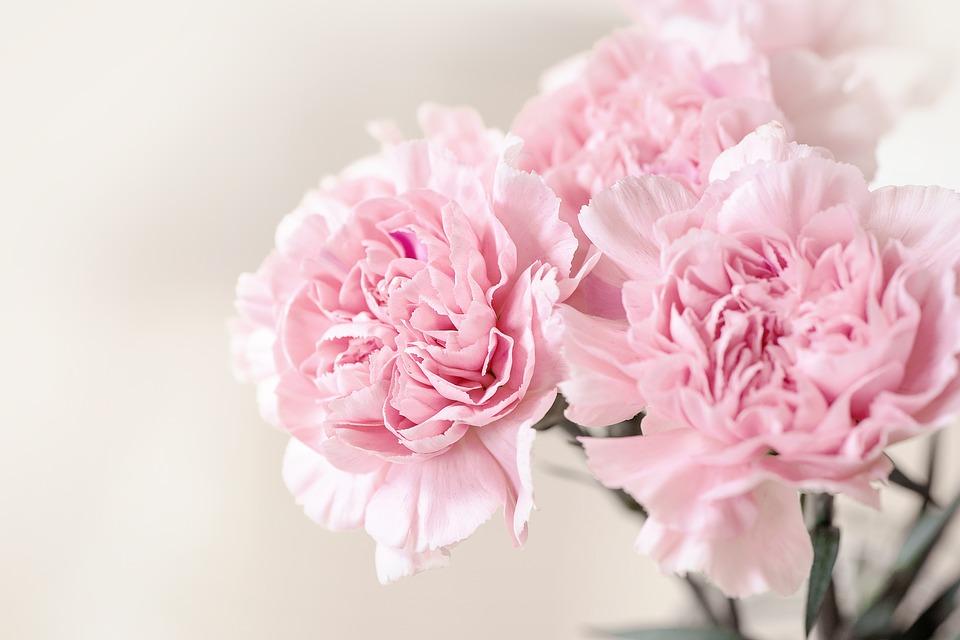 Януари – Карамфил. Любов, очарование и разграничение. Всеки цвят на карамфила има значение. Розовият карамфил, например, символизира безграничната майчина любов.