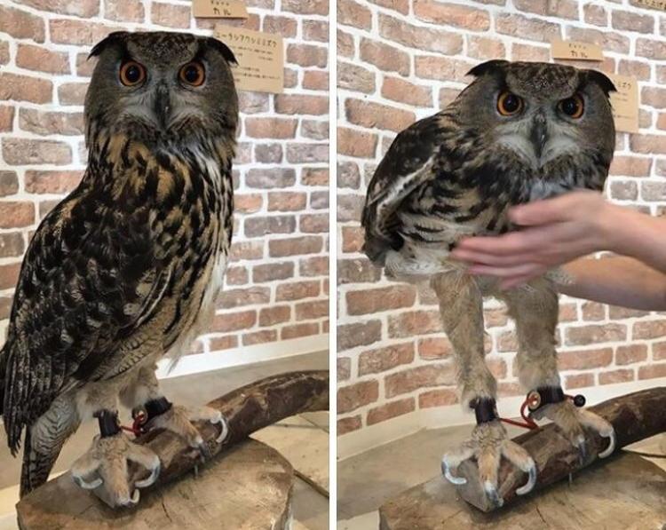 60% от совата са краката й!